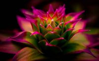pink-macro-nature-photography-blurred-depth-of-field-flowers