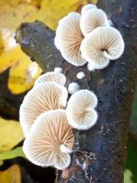 Mushrooms in my garden