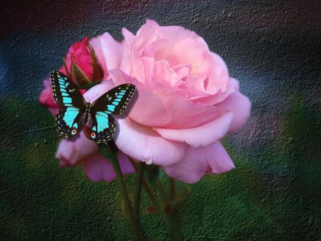 Butterfly-And-Rose