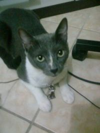 Snarf on fancy necklace. hihi