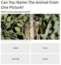 Can you name the animal? #27 of 40
