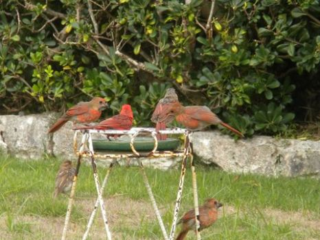5 Red birds and 1 Sparrow.