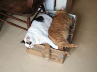 two cats on a crate … so happy