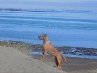 Diego at the Beach. Aotea Harbour, NZ