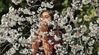 Woman and cherry tree blossoms