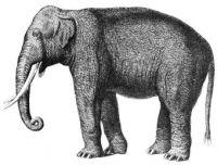 Elephant for Maya :)