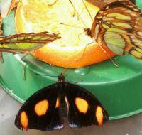 Butterfly restaurant - juice bar