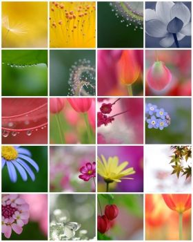 top 20 favorites, by rosemary on flickr