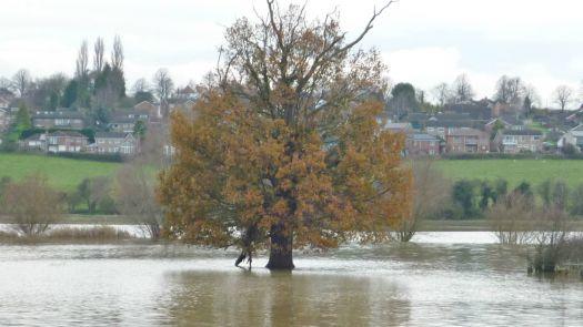 Nene Valley floods