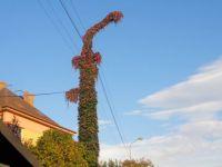podzimní drak