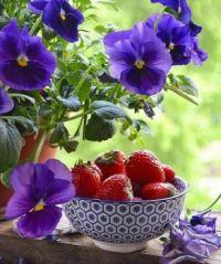 Macešky a jahody