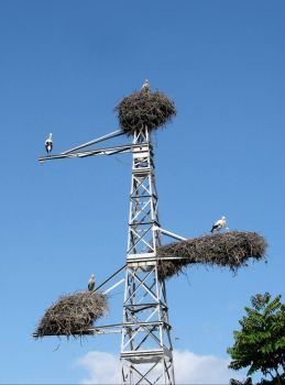 Did one stork forget to build its nest?