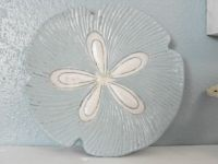 Painted sand dollar