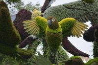 Bird made from plants.