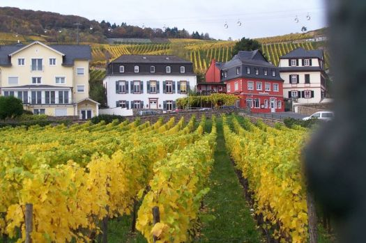 Rudesheim in the Rhine Valley