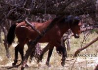 Wild Horses by Tina Wooten 9.19.2014