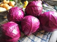 Blue Cabbages