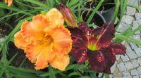 vzpomínka na letní květy