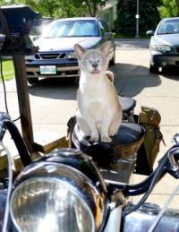 Hugo getting ready to ride the Velocette