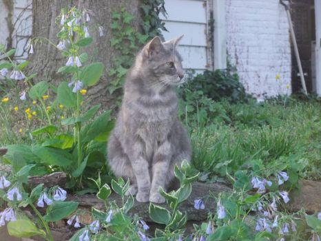 Ash, my cat