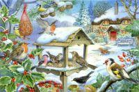 Birds winter feeding