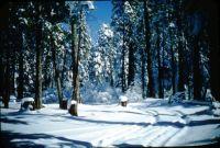 1953 Pollock Pines, CA