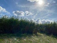 Beautiful Day for the Corn Maze Nov 2020