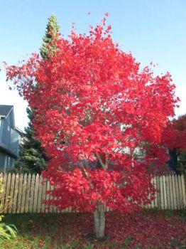 Autumn !