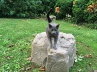A real cat on a fake rock.