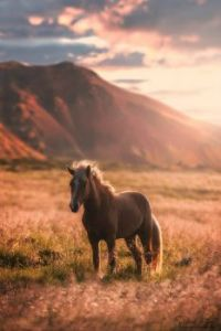 horse in the golden light