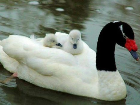 The Beauty of nature : Motherhood