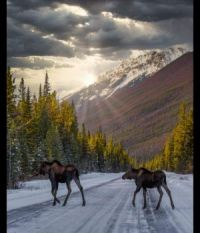 A Canadian Rockies Moment