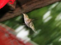 hummers 7-28-2015 079