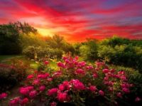 Sunrise and pink roses