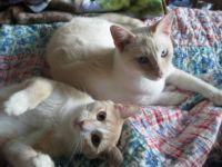 My Kitties Brownie (front) & Pukah