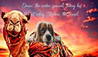 Omar, the Cocker Spaniel, taking his turn at riding Stephan, the camel. Thx Fran and The Digital Artist on PIXABAY.