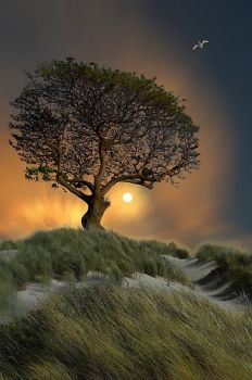 Fantastic Tree... Fantastic Photo!