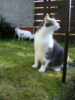 Ash - Wow, it's been ages since we've been outside. Does it look the same to you Freya?