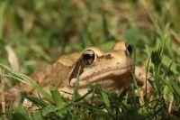 Toad.jpeg