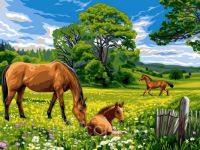 Beautiful horses in the meadow..
