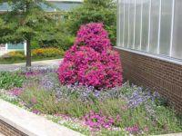 Botanical gardens at MSU (1)