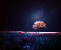 Nightime Field