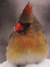Cardinal 3: