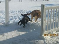 Play time in the snow