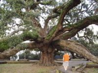 Treaty Oak, Jax,FL