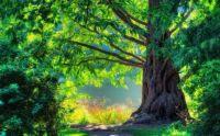 2  ~  'Tree of Life & Wisdom.'