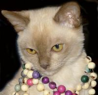 Archie wearing beads