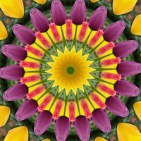 kaleidoscope 317 tulips again very large