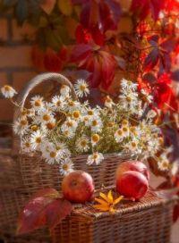 Zátiší s ovocem a květinami