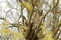 long-eared-owl-6063351_960_720